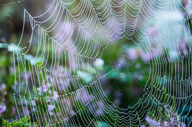 cobweb-2735902_640